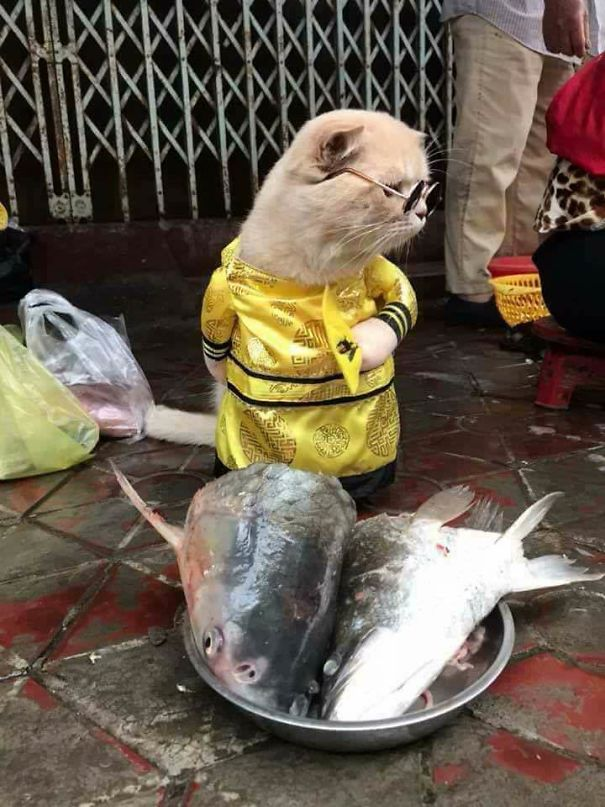 5a9fb61a67723-4-5a9e5685a4f02__605 Kitten Selling Fish In Vietnam Becomes The Latest Internet Sensation Random