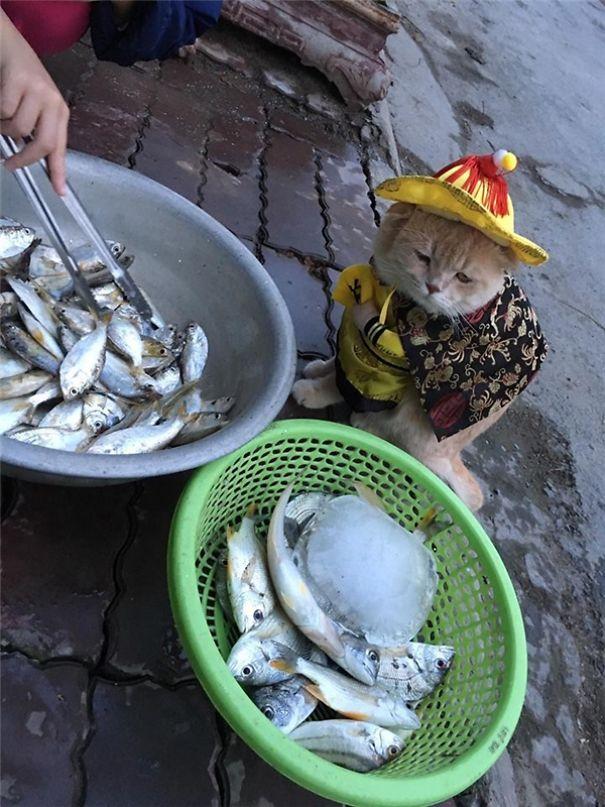 5a9fb61d1c20c-20170413-041149-2b_600x800-5a9e5235f1959__605 Kitten Selling Fish In Vietnam Becomes The Latest Internet Sensation Random