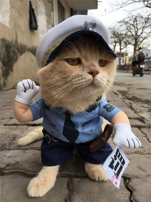 5a9fb61dbe2d9-20170413-041253-7_600x800-5a9e5246e5e90__605 Kitten Selling Fish In Vietnam Becomes The Latest Internet Sensation Random