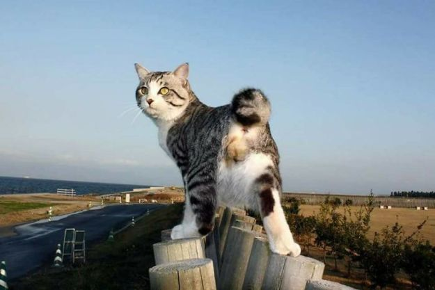 5acf6531ce556-photogenic-cat-noraneko-nyankichi-japan-143-5acdc2cfb7807__700 Meet The World's Most Photogenic Cat Who Can't Get A Bad Photo Taken Of Him Random