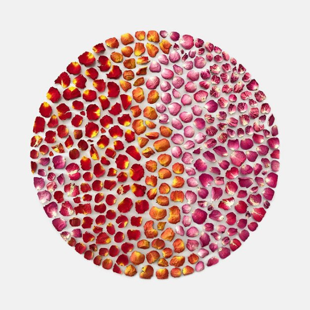 organizing-the-circle-series-kmsalvagedesign-kristen-meyer-5 Artist Arranges Everyday Objects To Make Perfect Art Pieces Art Random