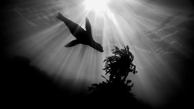 photography winners underwater photographer of the year contest 2018 10 - Vencedores do concurso de fotografia subaquática de 2018
