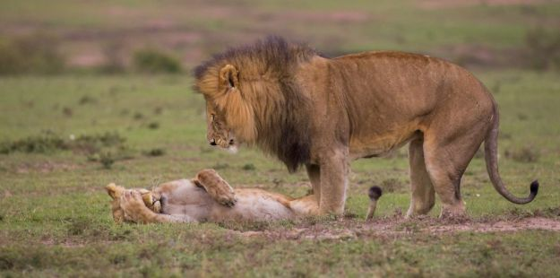5b9f5bf9dbc0b-comedy-wildlife-photography-awards-finalists-2018-25-5b9b5783395df__880 20+ Comedy Wildlife Photography Awards 2018 Finalists That Will Brighten Your Day Photography Random