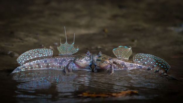 5b9f5bfa2602e-comedy-wildlife-photography-awards-finalists-2018-6-5b9b575c5a921__880 20+ Comedy Wildlife Photography Awards 2018 Finalists That Will Brighten Your Day Photography Random