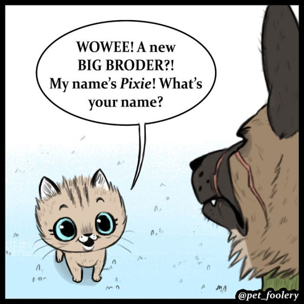 5bbb6f8d1b3de-funny-animal-comics-adventures-dogs-pixie-brutus-pet-foolery-2-5bb2046be0138__700 Adorable Comics About An Old Military Dog And A Little Kitten That Will Warm Your Heart Random