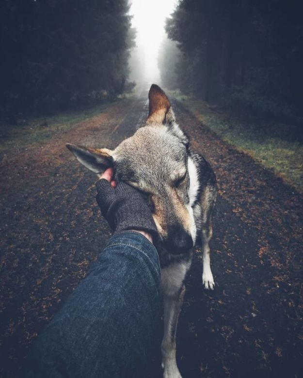5bc58f43a9f04-BoEmmgmni4q-png__700 20+ Pictures Of A Guy Petting His Dog For Those Tired Of #FollowMeTo Instagram Pics Photography Random