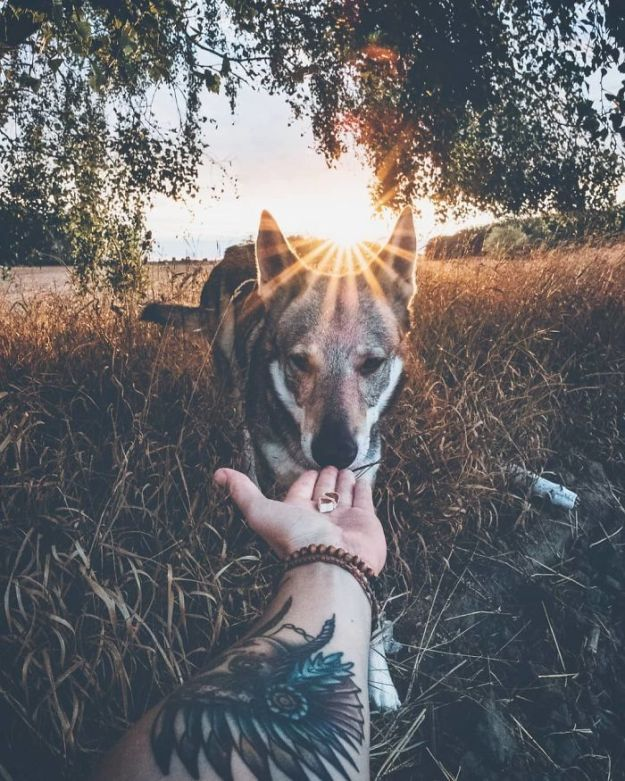 5bc58f43c95b1-BmgJ42TnDOF-png__700 20+ Pictures Of A Guy Petting His Dog For Those Tired Of #FollowMeTo Instagram Pics Photography Random