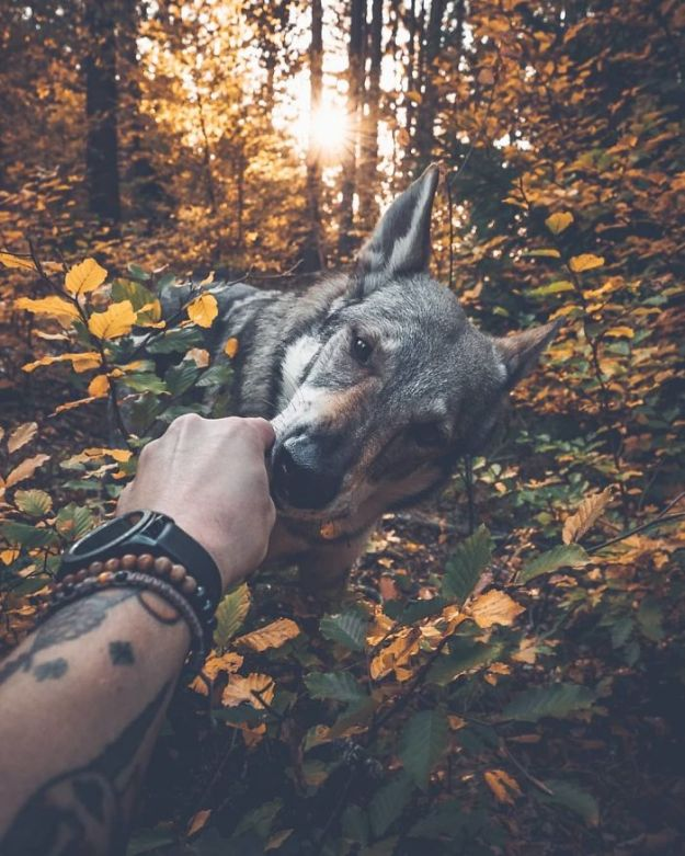 5bc58f45200bb-Bo1gYSfn3bv-1-png__700 20+ Pictures Of A Guy Petting His Dog For Those Tired Of #FollowMeTo Instagram Pics Photography Random