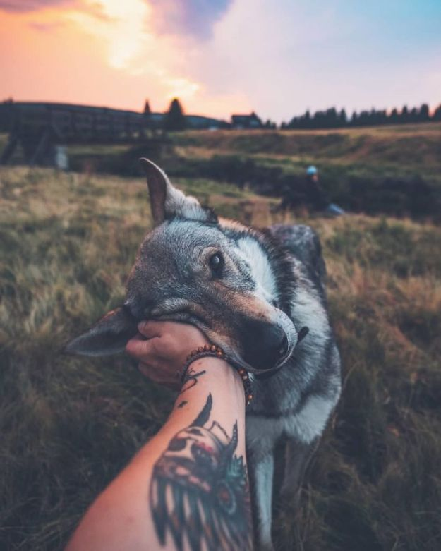 5bc58f45452c6-BmLigzjnpnj-png__700 20+ Pictures Of A Guy Petting His Dog For Those Tired Of #FollowMeTo Instagram Pics Photography Random