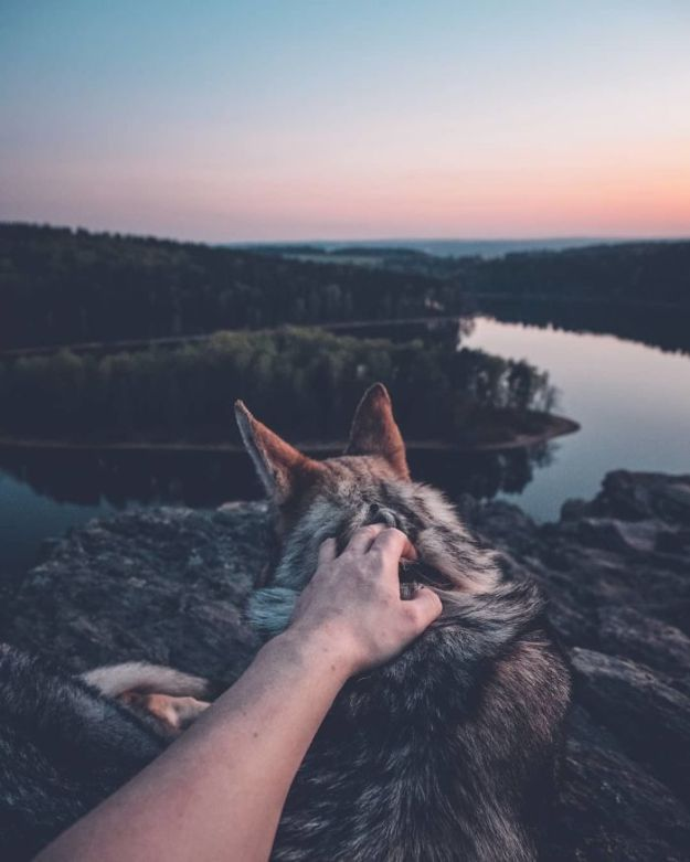 5bc58f475d398-Bh6z-SHg1D-png__700 20+ Pictures Of A Guy Petting His Dog For Those Tired Of #FollowMeTo Instagram Pics Photography Random