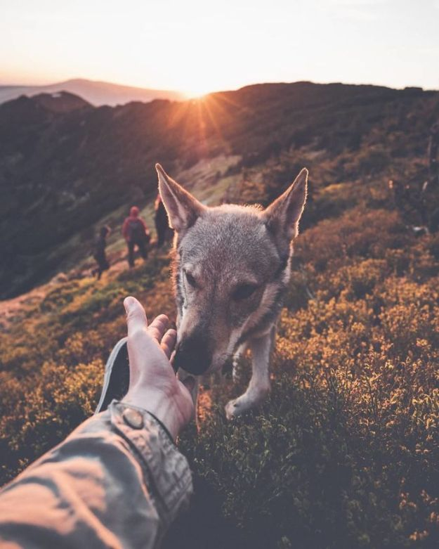 5bc58f479b47f-Bi3vKiVnJcO-png__700 20+ Pictures Of A Guy Petting His Dog For Those Tired Of #FollowMeTo Instagram Pics Photography Random