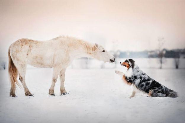 5c07def124ab9-BhJet2Lg-gR-png__880 50 Beautiful Photos Of Dogs Taken By Czech Photographer Kristýna Kvapilová Photography Random