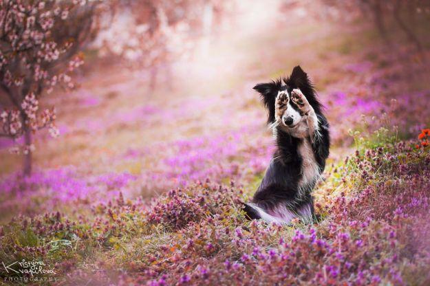 5c07def159b9d-Mountain-crew-adventures-of-two-girls-and-four-dogs-5c00fd71ac008__880 50 Beautiful Photos Of Dogs Taken By Czech Photographer Kristýna Kvapilová Photography Random