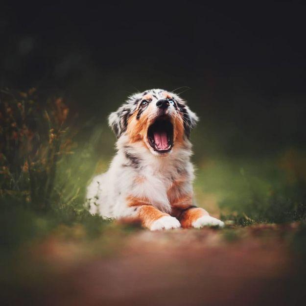 5c07def209260-BpWUpPJhZnV-2-png__880 50 Beautiful Photos Of Dogs Taken By Czech Photographer Kristýna Kvapilová Photography Random