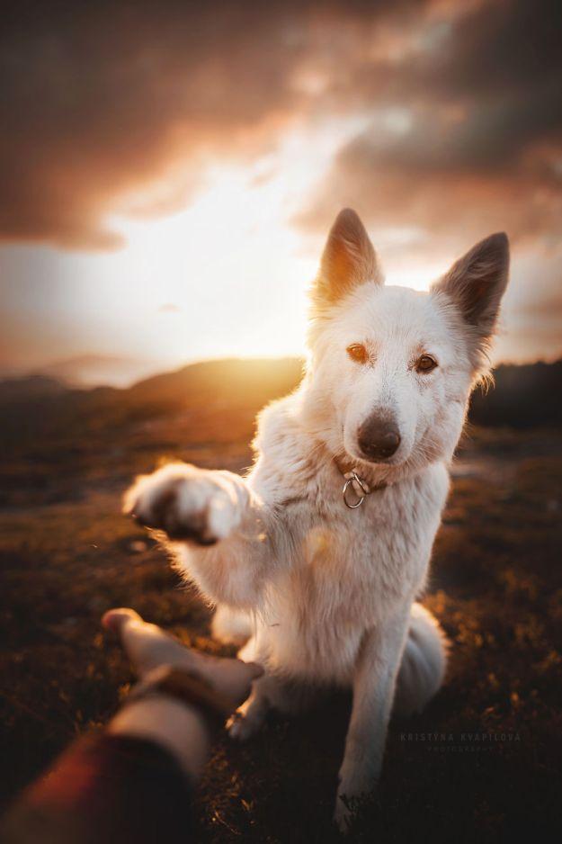 5c07def227959-Mountain-crew-5bfc534e41a06__880 50 Beautiful Photos Of Dogs Taken By Czech Photographer Kristýna Kvapilová Photography Random