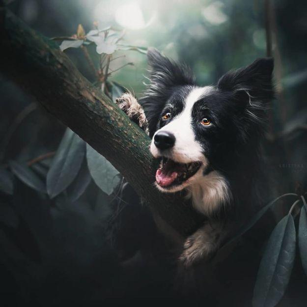 5c07def2a7cf7-BqJ4deuBA7_-png__880 50 Beautiful Photos Of Dogs Taken By Czech Photographer Kristýna Kvapilová Photography Random