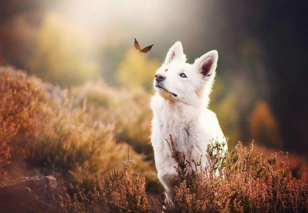 5c07def3165dd-BSHDcLlAL5z-png__880 50 Beautiful Photos Of Dogs Taken By Czech Photographer Kristýna Kvapilová Photography Random