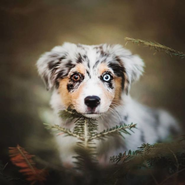 5c07def38fa61-BpL8lCEhX9R-png__880 50 Beautiful Photos Of Dogs Taken By Czech Photographer Kristýna Kvapilová Photography Random