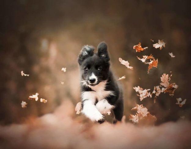 5c07def433486-BjCAIk9hKy--png__880 50 Beautiful Photos Of Dogs Taken By Czech Photographer Kristýna Kvapilová Photography Random