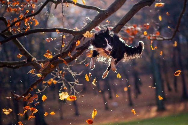 5c07def48c30e-Mountain-crew-adventures-of-two-girls-and-four-dogs-5c00fd4c3eb0e__880 50 Beautiful Photos Of Dogs Taken By Czech Photographer Kristýna Kvapilová Photography Random