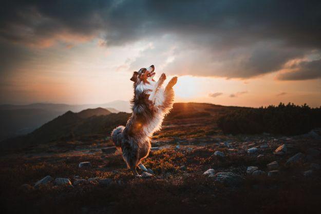 5c07def51c934-Mountain-crew-adventures-of-two-girls-and-four-dogs-5bfc549c91761__880 50 Beautiful Photos Of Dogs Taken By Czech Photographer Kristýna Kvapilová Photography Random