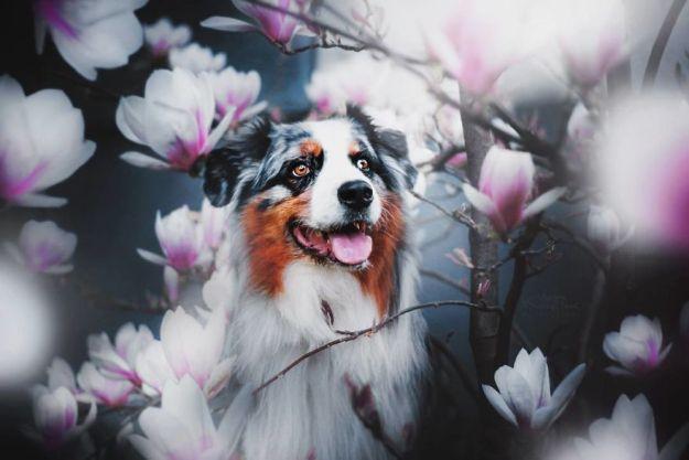 5c07def559b7f-BThJAtwg6wo-png__880 50 Beautiful Photos Of Dogs Taken By Czech Photographer Kristýna Kvapilová Photography Random