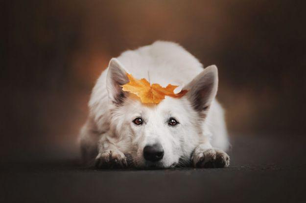 5c07def5786b7-Mountain-crew-adventures-of-two-girls-and-four-dogs-5c00fda4720c3__880 50 Beautiful Photos Of Dogs Taken By Czech Photographer Kristýna Kvapilová Photography Random