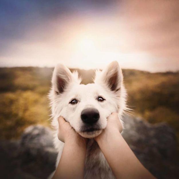 5c07def591e86-BijRhxPg7RE-png__880 50 Beautiful Photos Of Dogs Taken By Czech Photographer Kristýna Kvapilová Photography Random