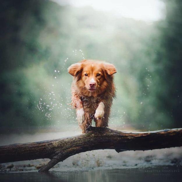 5c07def63a1e6-BovfnhRBnAd-png__880 50 Beautiful Photos Of Dogs Taken By Czech Photographer Kristýna Kvapilová Photography Random