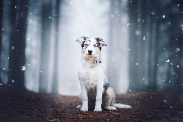 5c07def695741-BOnUf1ughde-png__880 50 Beautiful Photos Of Dogs Taken By Czech Photographer Kristýna Kvapilová Photography Random