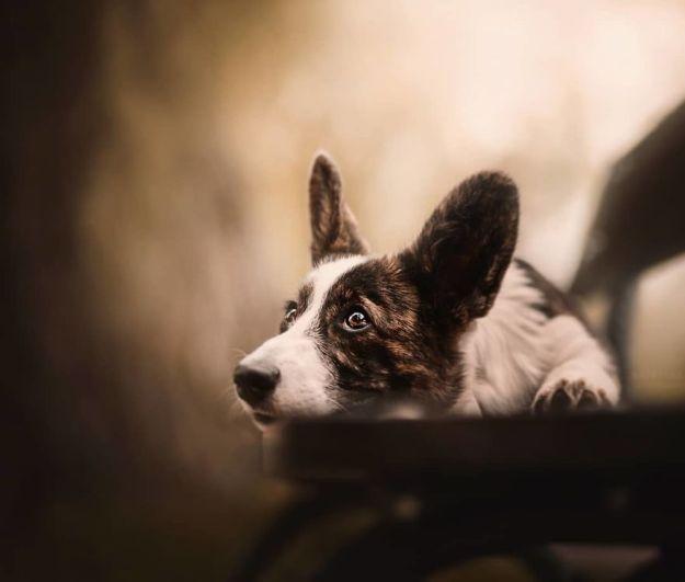5c07def6b4fd1-BlC0ec9BCfM-png__880 50 Beautiful Photos Of Dogs Taken By Czech Photographer Kristýna Kvapilová Photography Random