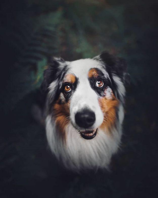 5c07def6cc88c-BpwGY3nBBEZ-png__880 50 Beautiful Photos Of Dogs Taken By Czech Photographer Kristýna Kvapilová Photography Random