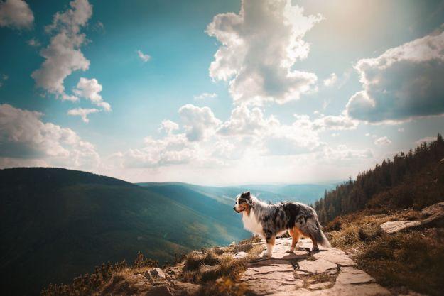 5c07def7159d8-Mountain-crew-5bfc53f0c6e6f__880 50 Beautiful Photos Of Dogs Taken By Czech Photographer Kristýna Kvapilová Photography Random