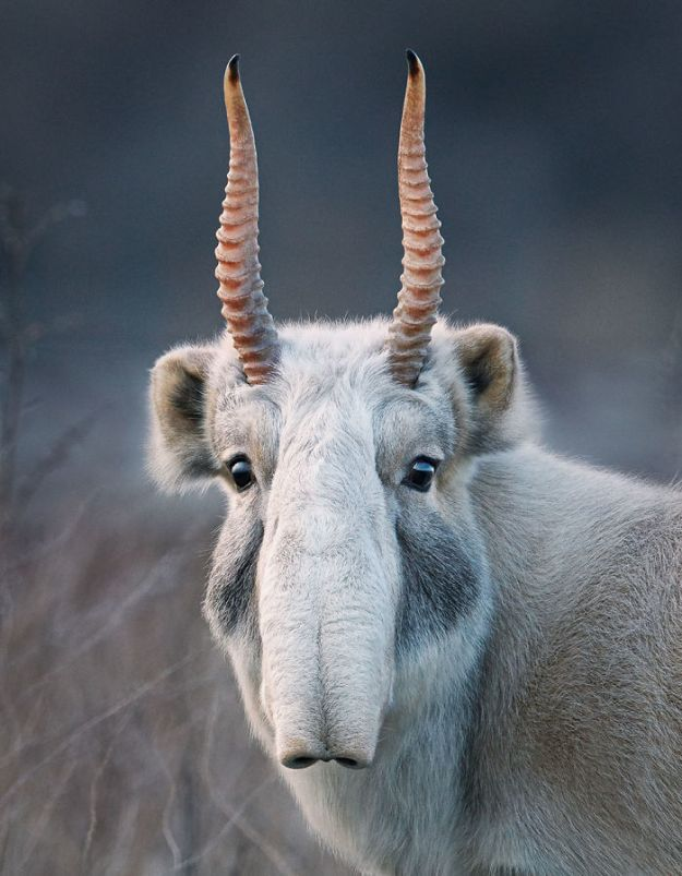 5c136d151b34d-endangered-animals-tim-flach-5a45fa2a48ab2__700 This Photographer Took Pictures Of Animals That Could Soon Be Extinct And This Might Be Your Last Chance To See Them Photography Random