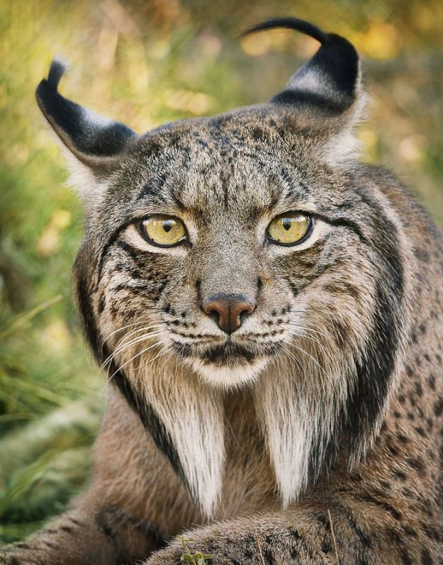 5c136d15deaf8-endangered-animals-tim-flach-5a45f975094ae__700 This Photographer Took Pictures Of Animals That Could Soon Be Extinct And This Might Be Your Last Chance To See Them Photography Random