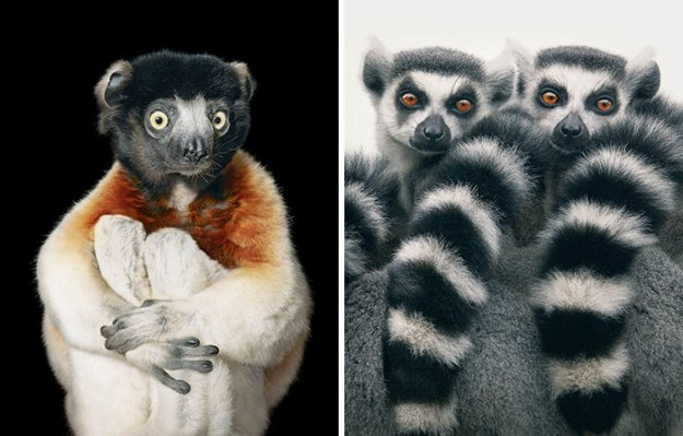 5c136d1652d39-endangered-animals-tim-flach-6-5a460121c7533__700 This Photographer Took Pictures Of Animals That Could Soon Be Extinct And This Might Be Your Last Chance To See Them Photography Random