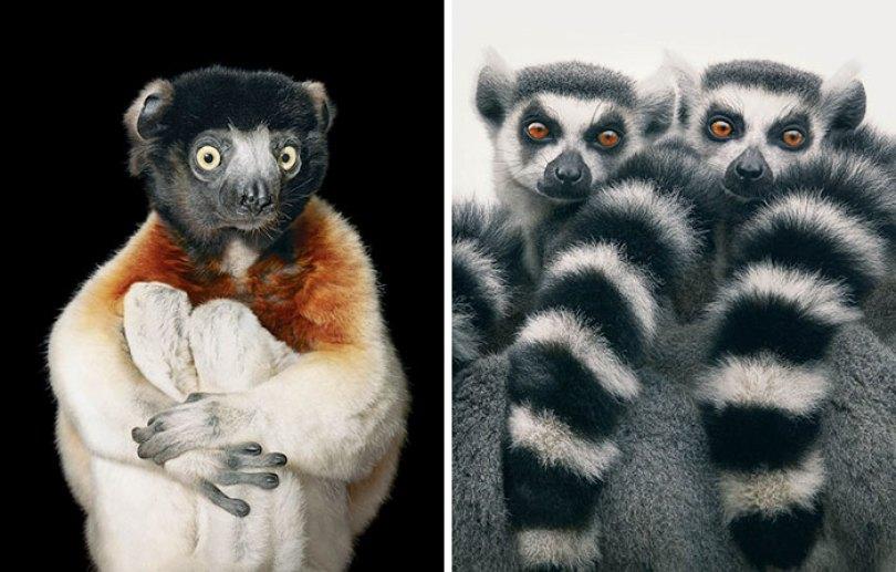 5c136d1652d39 endangered animals tim flach 6 5a460121c7533  700 - Fotos Incríveis de animais que podem em breve ser extintos