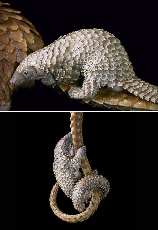 5c136d166f41e endangered animals tim flach 5a45f4cf6c061  700 - Fotos Incríveis de animais que podem em breve ser extintos