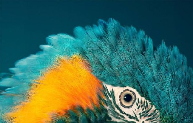 5c136d18d2d38-endangered-animals-tim-flach-5a45f64bb4bc2__700 This Photographer Took Pictures Of Animals That Could Soon Be Extinct And This Might Be Your Last Chance To See Them Photography Random