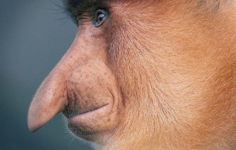 5c136d18eeeca tim flach portrait animaux disparition 20 5a46026bacdbf png  700 - Fotos Incríveis de animais que podem em breve ser extintos