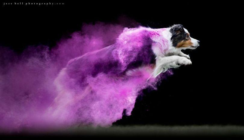 5c41e16dddbc9 49210911 1428331117297614 2578252138891182080 o 5c3f4b1046be9  880 - Fotógrafo jogou pó colorido em cachorros e as fotos você precisa ver