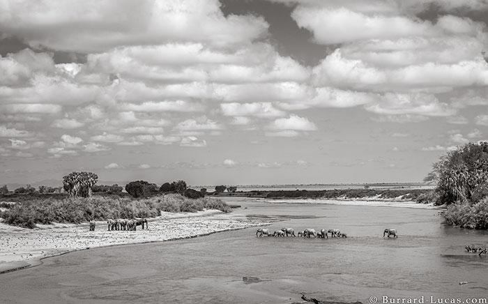 5c8a4f5dd76ac cow elephant queen super tusker will burrard lucas tsavo kenya 3 5c8901b04b9dc  700 - Fotógrafo capturou imagens impressionantes da lendária 'rainha dos elefantes' antes de morrer