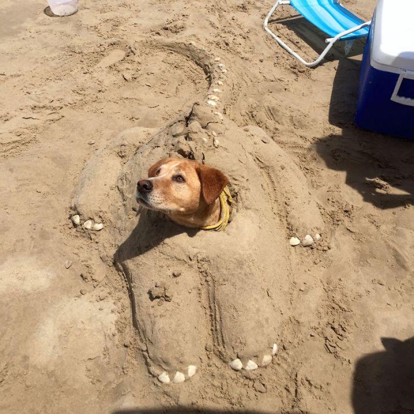5cfa471400064 5b69a13fb2e89 OGDmpjf  700 - Coisas interessantes que as pessoas encontraram na praia