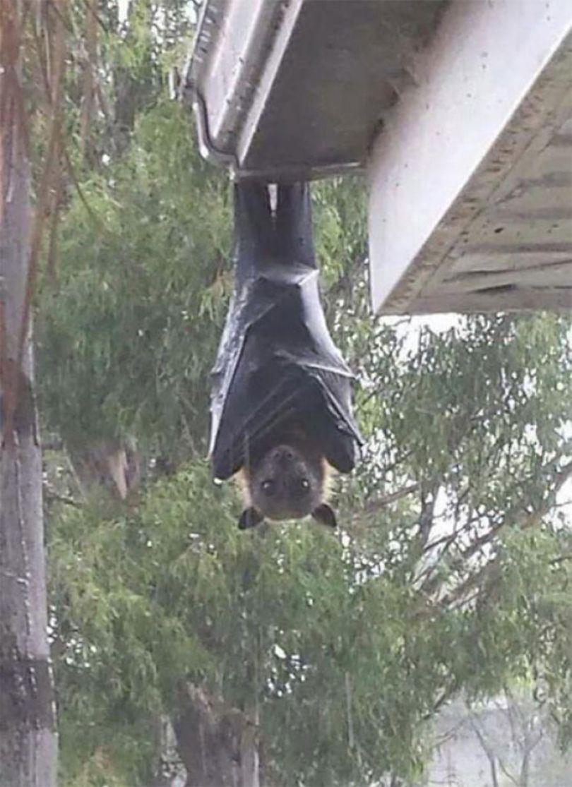 5d3020dfbcd43 australia scary nature animals 3 5d1b46e75d24b  700 - 40 Fotos que provam que a Australia não é para qualquer um
