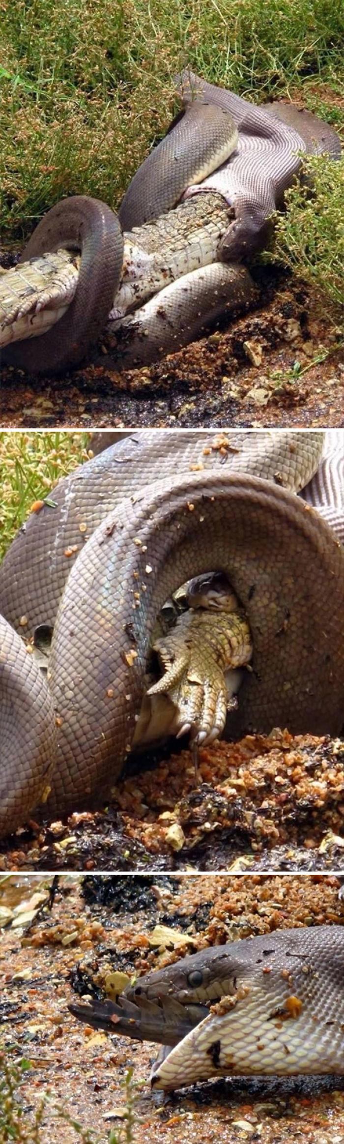 5d3020dff3c3c australia scary nature animals 5 5d230233ded3c  700 - 40 Fotos que provam que a Australia não é para qualquer um
