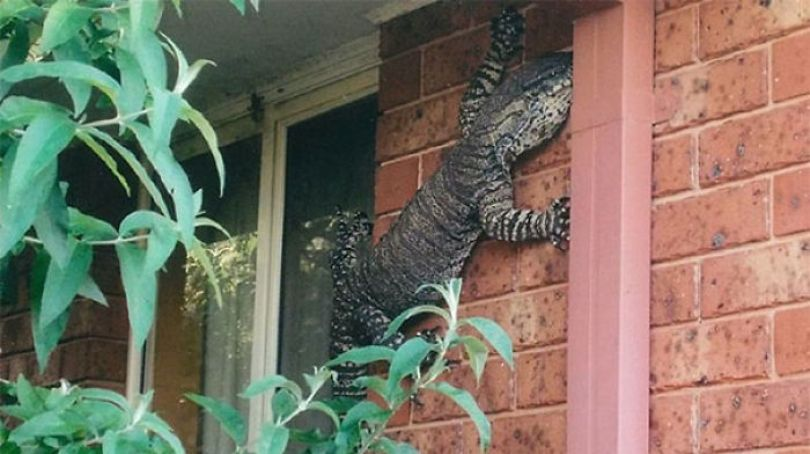 5d3020e037f98 australia scary nature animals 19 5d26f5d081ecd  700 - 40 Fotos que provam que a Australia não é para qualquer um