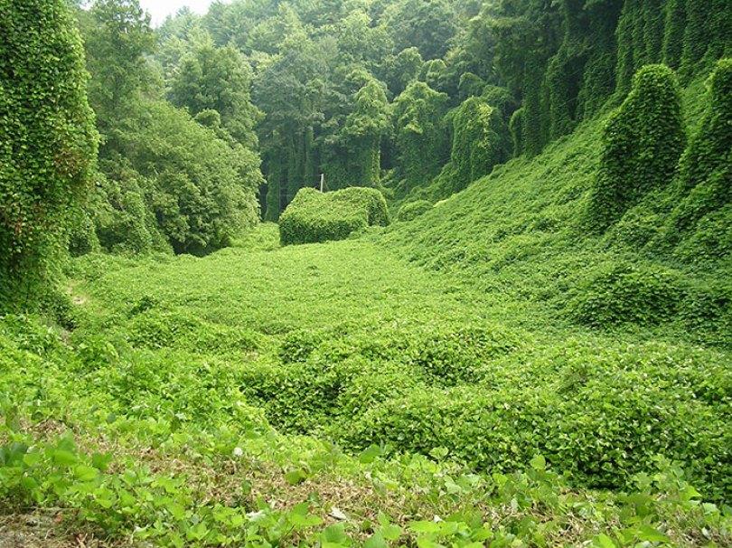 5d3020fac00ea nature reclaiming taking over 61 5cf13b336a633  700 - Poder da Natureza - Quando a paisagem já faz parte da natureza