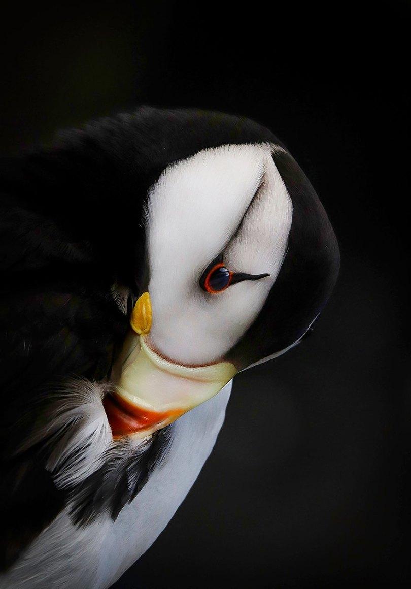 audubon photography awards 2019 winners 1 - Os vencedores dos prêmios Audubon Bird Photography 2019 foram anunciados