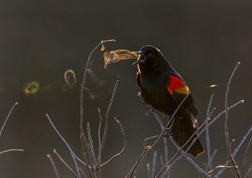 audubon photography awards 2019 winners 7 - Os vencedores dos prêmios Audubon Bird Photography 2019 foram anunciados