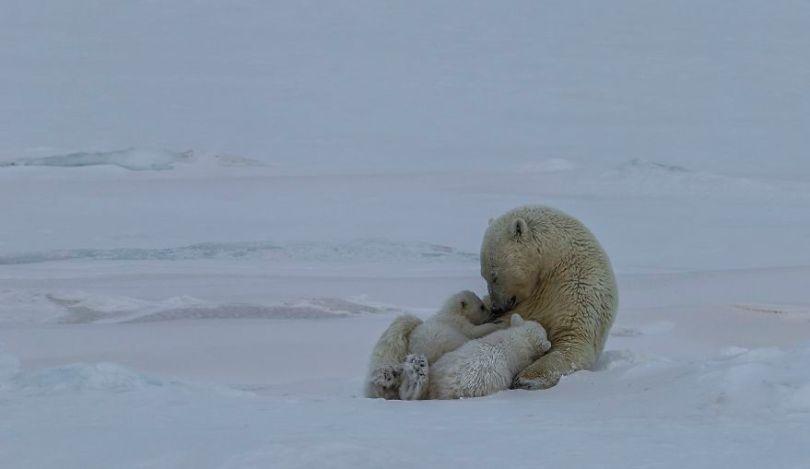 5d56596a1fdd6 Polar Bear Love Norway uglefisk Paal UglefiskAGORA images 5d5181cdb6e5b  880 - 40 fotos apaixonantes e interessantes sobre o Amor